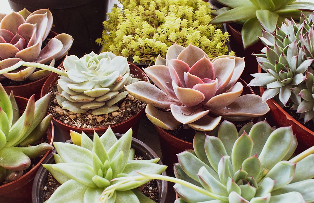 Moderne Zimmerpflanzen